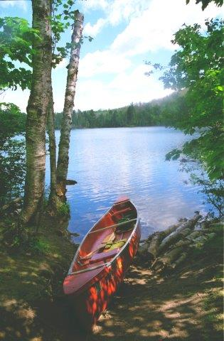 a red canoe sitting in between trees in front of a lake